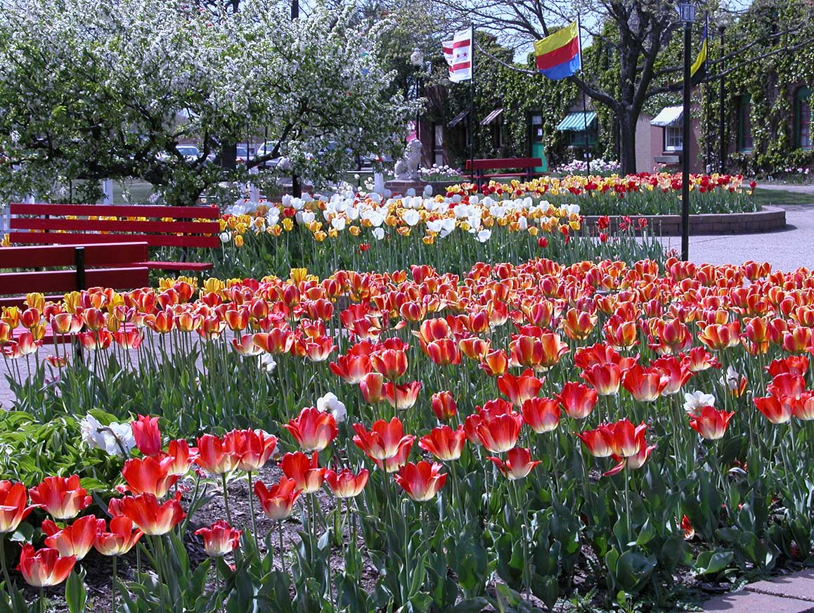 Tulip Time is a beautiful time at Dutch Village in Holand